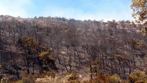 Χίος: Ανεξέλεγκτη η πυρκαγιά