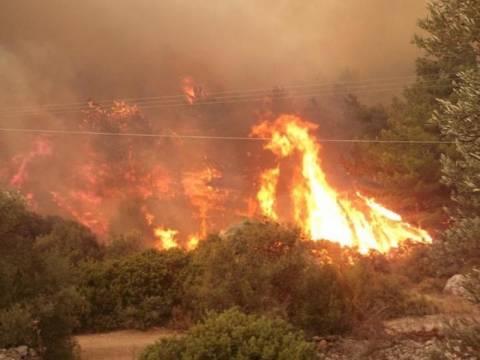 Χίος: Ξέφυγε και πάλι η φωτιά