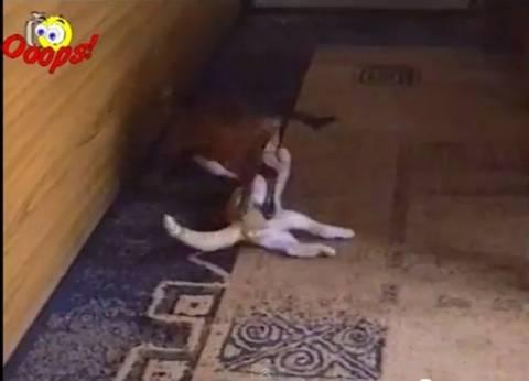 Όταν τα ζώα παλεύουν…