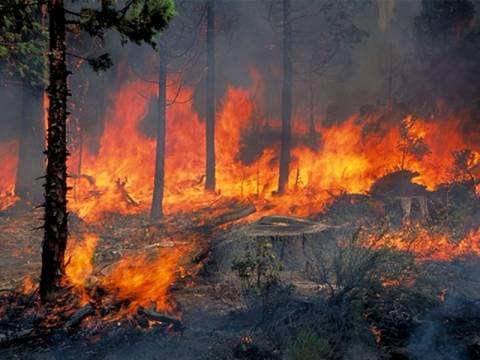 Σε ύφεση η πυρκαγιά στο όρος Κούλα στην Ξάνθη