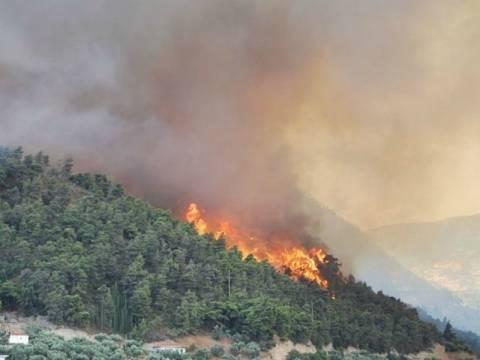 Υπό μερικό έλεγχο η πυρκαγιά στην Λακωνία