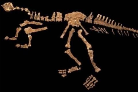 Ανακαλύφθηκε νέο είδος δεινοσαύρου!
