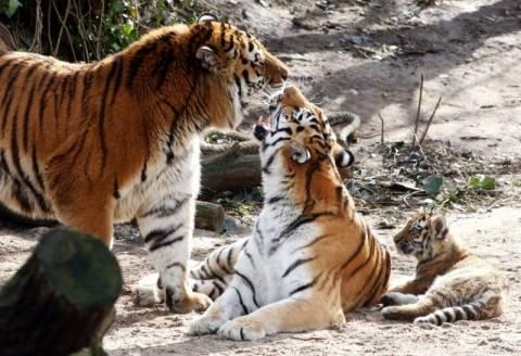Τραγωδία σε ζωολογικό κήπο της Κολονίας