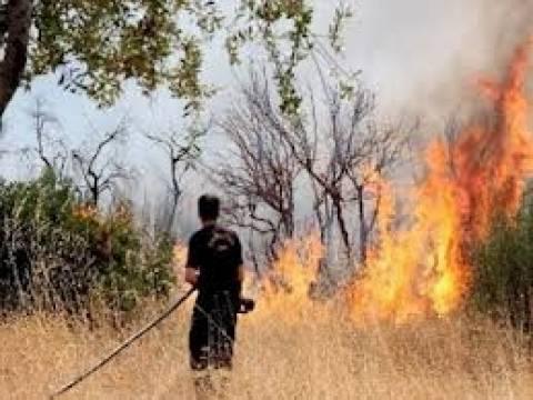 Σε ύφεση η φωτιά στην Αρκίτσα