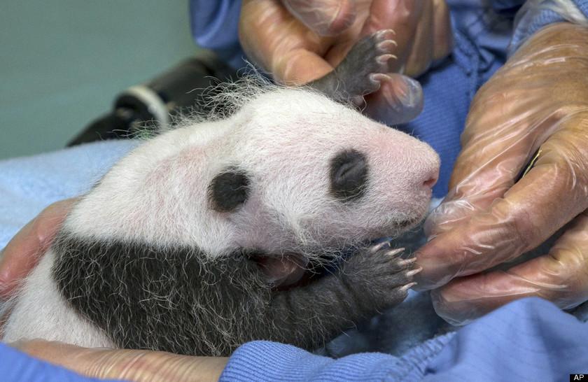 Οι πιο γλυκές φωτογραφίες ζώων της εβδομάδας που πέρασε
