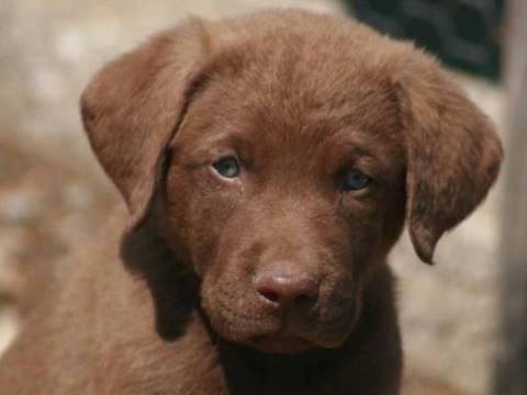 Ξάνθη: Δηλητηρίασαν έξι αδέσποτα σκυλιά