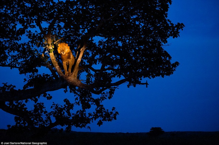 Φωτογραφίες άγριων ζώων που καθηλώνουν!