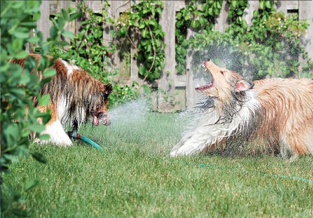 20 σκυλάκια που δεν θέλουν να τελειώσει το καλοκαίρι (pics)