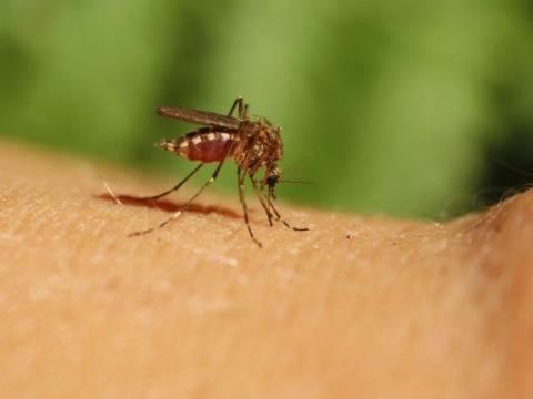 ΗΠΑ: Επικίνδυνη έξαρση των κρουσμάτων του ιού δυτικού Νείλου