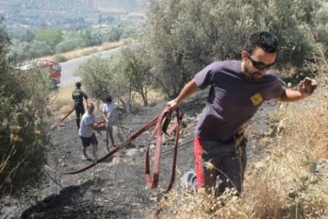 Κρήτη: 510 στρέμματα κάηκαν από τη φωτιά στο Σμάρι