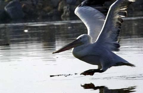 Δέλτα του Έβρου: Φωλιά για χιλιάδες πουλιά