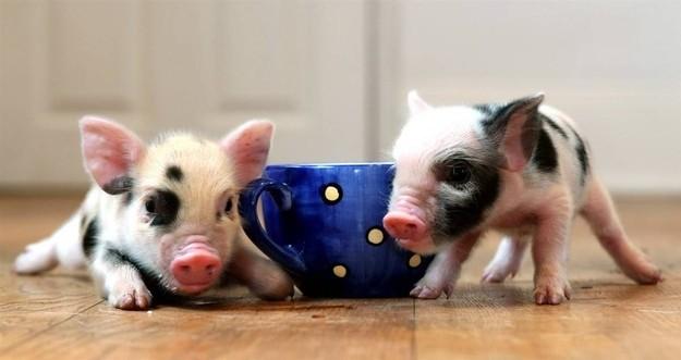Οι πιο γλυκές φωτογραφίες με ζώα!