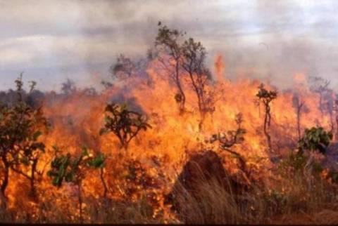 Πυρκαγιά στο Βασιλικό Μεσσηνίας