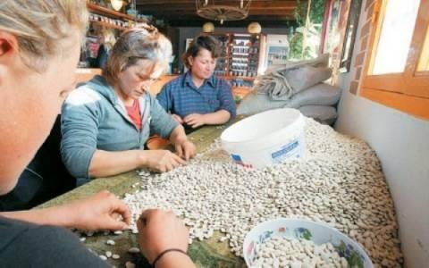 Να δοθεί βάρος στην ντόπια παραγωγή οσπρίων θέλει το Υπ.Αγρ.Ανάπτυξης