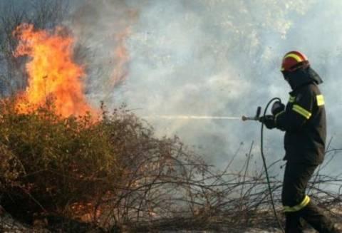 Υπό μερικό έλεγχο η πυρκαγιά στο Βασιλικό Μεσσηνίας