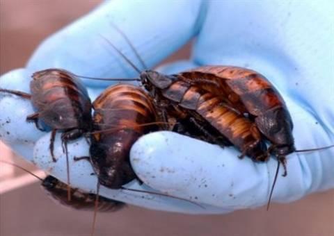 Τρεις τρόποι για να απαλλαχτείτε από τις κατσαρίδες