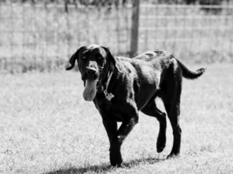 Συγκλονιστικό: Σκύλος διέσχισε 800 χλμ για βρει το αφεντικό του!