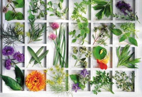 Τα 10 μαγικά βότανα για λοιμώξεις, μολύνσεις και φλεγμονές