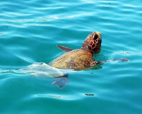 Νεκρή καρέτα - καρέτα στη παραλία της Νέας Χώρας στα Χανιά