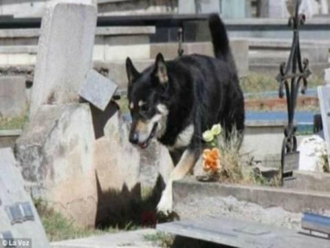 Σκύλος δεν φεύγει από τον τάφο του αφεντικού του εδώ και 6 χρόνια