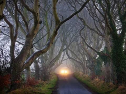 The Dark Hedges: Ένας δρόμος βγαλμένος από παραμύθι! (pics)