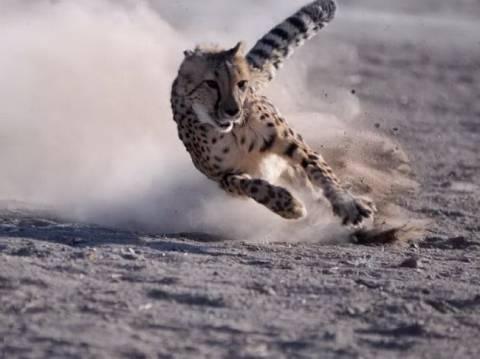 Δείτε την τσίτα που τρέχει τα 100 μ. σε 5.95 δευτερόλεπτα!