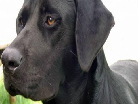 Απίστευτο: Τον πυροβόλησε ο... σκύλος του!
