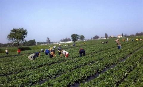 Δεν «τιμούν» τα αγροτικά μας προϊόντα οι Ευρωπαίοι εταίροι μας
