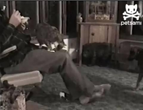 Βίντεο: Ο σκύλος η γάτα και το ποντίκι παίζουν μέσα στο σπίτι