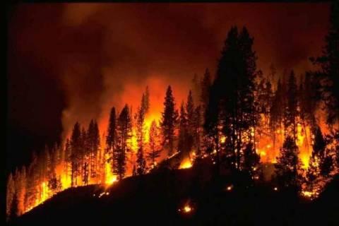 Πάνω από 500.000 στρέμματα δάσους έγιναν στάχτη το καλοκαίρι
