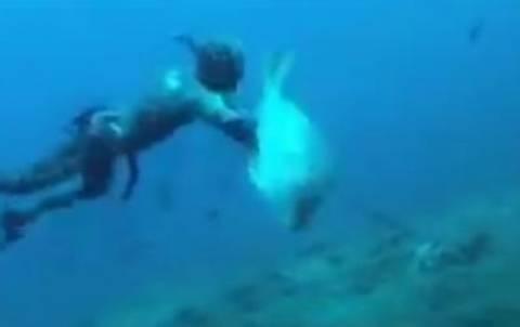Βίντεο: Ο ψαροντουφεκάς  την πάτησε άσχημα