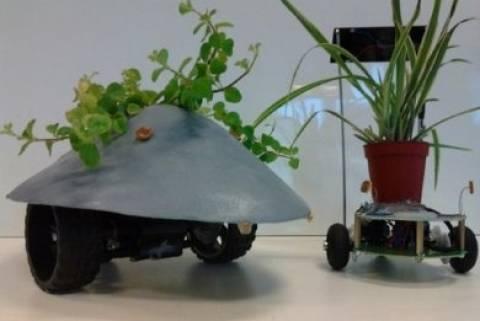 Ρομποτικά φυτά μετακινούνται ανάλογα τον ήλιο!