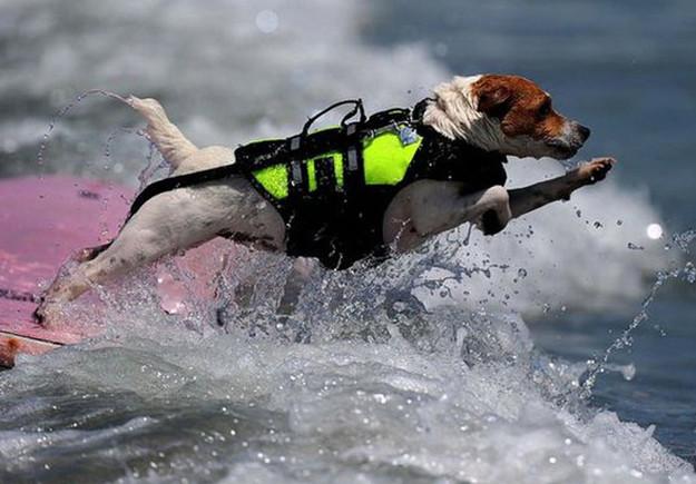 20 σκυλάκια που δε θέλουν να τελειώσει το καλοκαίρι