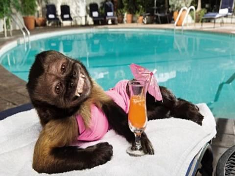 Μαϊμού με μισθό.... 15.000 ευρώ!