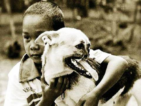 Απίστευτη ιστορία: Ένας σκύλος ήρωας!
