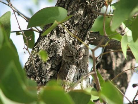 Τεστ παρατηρητικότητας: Βρες την κουκουβάγια! (pics)