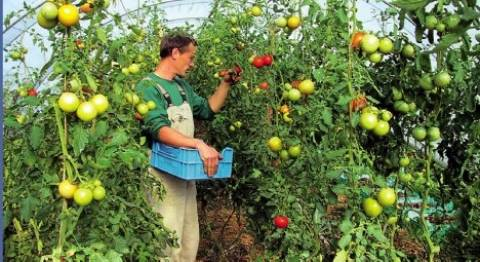 Κρατικά προγράμματα για νέους αγρότες