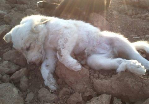 ΣΟΚ: Δηλητηρίασαν με φυτοφάρμακο σκυλιά σε παραλία της Ξάνθης