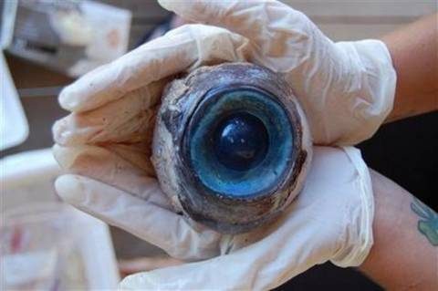 Τεράστιο μάτι μυστηριώδους πλάσματος ξεβράστηκε στη Φλόριντα