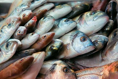 Ο ΟΠΕ υλοποιεί επιχειρησιακό σχέδιο προώθησης κατεψυγμένων αλιευμάτων