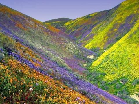 Εκπληκτικές φωτογραφίες: Η κοιλάδα των λουλουδιών