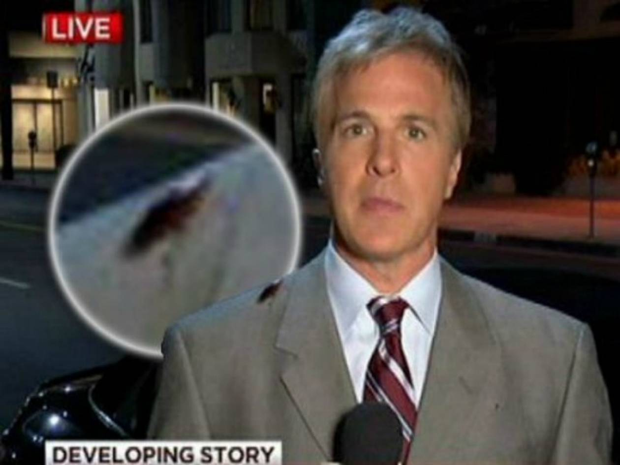 Βίντεο: Κατσαρίδα... όρμησε σε δημοσιογράφο!