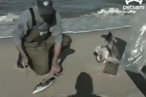 Βίντεο: Ο γλάρος του έκλεψε το…φιλέτο
