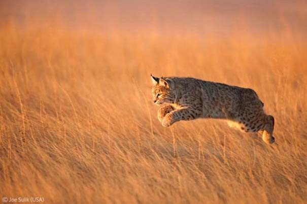 Οι καλύτερες φωτογραφίες άγριας φύσης για το 2012