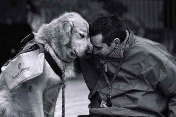 Σκύλος: Ο καλύτερος φίλος του ανθρώπου (pics)