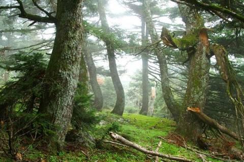 Αθίγγανοι εισβάλλουν σε δάση και πωλούν ξύλα φθηνότερα από ξυλέμπορους