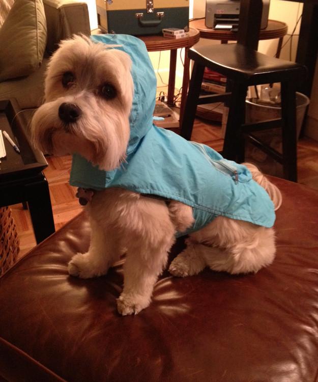 Σκυλάκια έτοιμα για τον τυφώνα! (pics)