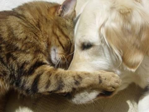 Άμεσο εμβολιασμό για λύσσα σε σκύλους- γάτες ζητά η Περιφέρεια Ηπείρου