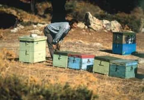 Ενίσχυση ύψους 5.5 εκατ. € στη μελισσοκομία