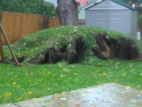 Απίστευτο βίντεο: Ο τυφώνας Σάντι ξεριζώνει δέντρο